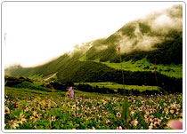 Valley of Flower Trek, Uttarakhand Tours