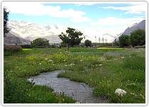ubra Valley, Ladakh Tours